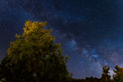 Vintergatan över skogen på de Troodos bergen i Cypern Royaltyfria Foton