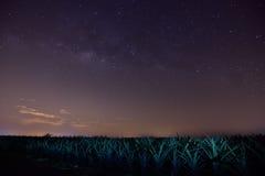 Vintergatan i ananaslantgård Arkivbild