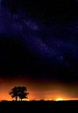 Vintergatan och ett träd Arkivbilder