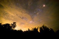 Vintergatan och några träd arkivfoton