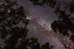 Vintergatangalax som inramas av träd fotografering för bildbyråer