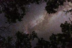 Vintergatangalax som inramas av trädkonturer royaltyfri fotografi