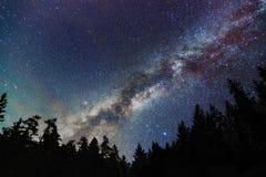 Vintergatangalax, stjärnklar himmel med träd starry natt royaltyfria bilder