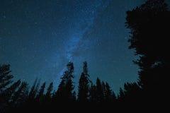 Vintergatanstjärnor över högväxta träd Royaltyfri Fotografi