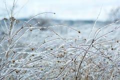 Vintergräs som täckas med is Royaltyfri Fotografi