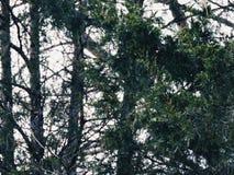 Vintergräsplan Royaltyfri Foto
