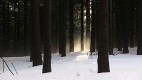 Vintergrön skog för härligt vinterdimmaberg i Europa arkivfilmer