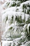 Vintergrön Snow Arkivbilder