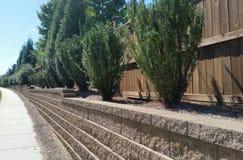 Vintergröna buskar i behållande vägg för tegelsten längs trottoaren Royaltyfri Bild