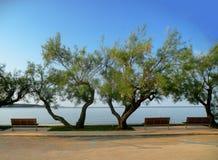 vintergröna buskar och bänkar som vänder mot Adriatiskt havet royaltyfri foto