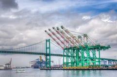 Vintergröna Marine Corporation Container Cranes på port av Los-Ang arkivbild