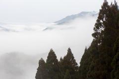 Vintergröna träd med bergdimmabakgrund Arkivfoton