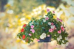 Hänga för blomma Royaltyfri Bild