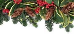 Vintergrönskagräns Royaltyfri Bild