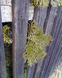Vintergrönt träd med insnöat min organiska trädgård royaltyfri bild