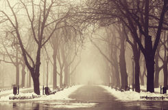 Vintergränd i Odessa, Ukraina. Royaltyfri Foto