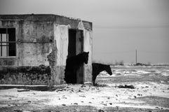Vinterhästar Fotografering för Bildbyråer