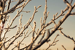 Vinterhandlag Arkivfoton