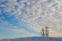 Vinterhimmel Royaltyfria Bilder