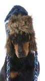 Vinterhund Arkivfoto