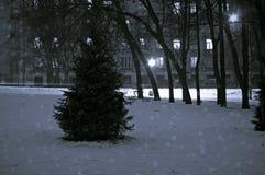 Vinterjulgranen i det snöig parkerar Ryssland svart white Arkivfoto