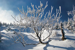 Vinterkramp royaltyfria foton