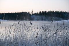 Vinterland_2 Fotos de Stock Royalty Free