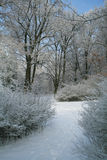 Vinterlandsape Arkivfoton