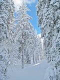 Vinterlandskap Royaltyfria Foton