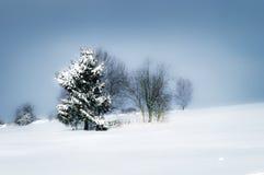 Vinterlandskap  Royaltyfri Foto