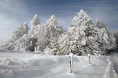 Vinterlandskap. Royaltyfri Fotografi