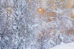 Vinterlandskap. Fotografering för Bildbyråer
