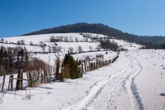 Vinterlandskap av bergskogen Royaltyfria Bilder