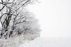 Vinterlandskap av det frostade trädet  Arkivbild