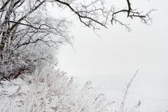 Vinterlandskap av det frostade trädet   Royaltyfria Bilder