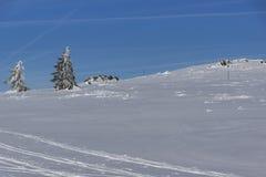 Vinterlandskap av det Vitosha berget, Sofia City Region, Bulgarien royaltyfri bild