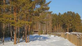 Vinterlandskap av hus som står i djurliv stock video