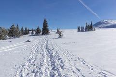 Vinterlandskap av platåPlatoto område på det Vitosha berget, Sofia City Region, Bulgarien arkivfoto