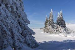 Vinterlandskap av platåPlatoto område på det Vitosha berget, Sofia City Region, Bulgarien arkivfoton