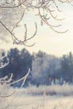 Vinterlandskap av snö-täckte fält, träd Arkivfoton