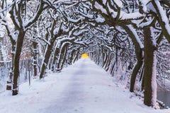 Vinterlandskap av snöig parkerar i Gdansk Arkivfoton