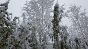 Vinterlandskap av Yakutia i Ryssland arkivbilder