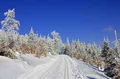 Vinterlandskap för argt land Royaltyfri Foto