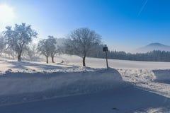 Vinterlandskap - frostigt vinterträd i skogen med soluppgång arkivbild