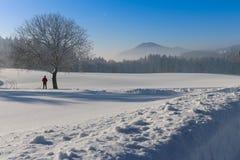 Vinterlandskap - frostigt vinterträd i skogen med soluppgång royaltyfri foto