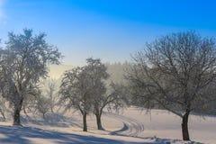 Vinterlandskap - frostigt vinterträd i skogen med soluppgång royaltyfri bild