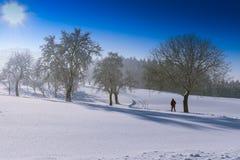 Vinterlandskap - frostigt vinterträd i skogen med soluppgång arkivfoton