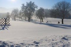 Vinterlandskap - frostigt vinterträd i skogen med soluppgång arkivfoto