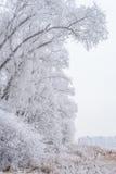 Vinterlandskap, fryste träd Arkivbilder