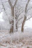 Vinterlandskap, fryste träd Arkivfoto